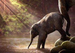 Elefanti Nani e Pappagalli Giganti