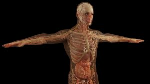 """CaVβ1E, la proteina """"anti-age"""" che fa bene ai muscoli"""