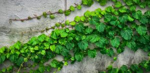 Beautiful Ivy: in forma con l'edera