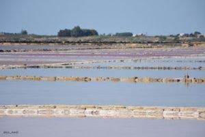 """Un apostrofo rosa fra le parole """"alobacteria"""" e """"alga"""""""